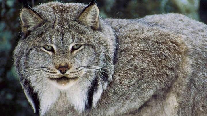 Lynx, by Linx - image 1 - student project