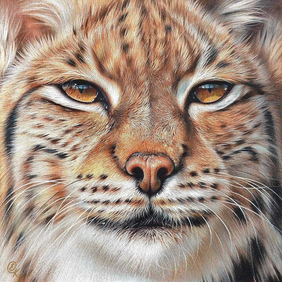 Lynx, by Linx - image 2 - student project