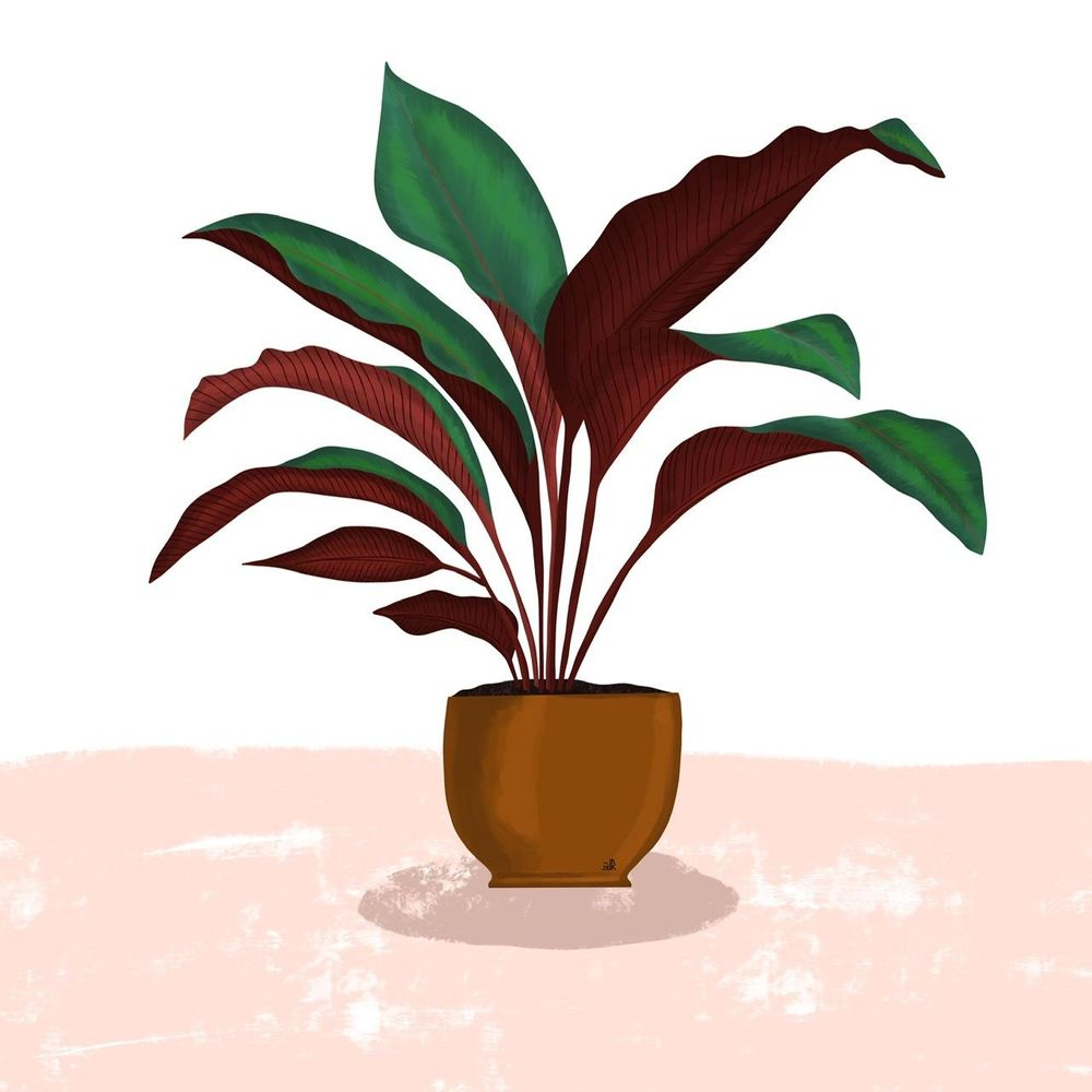 Plant illustration - image 1 - student project