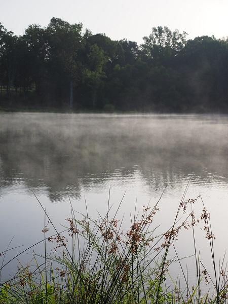 Misty Morning - image 1 - student project