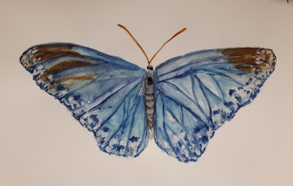 Watercolor butterflies - image 2 - student project