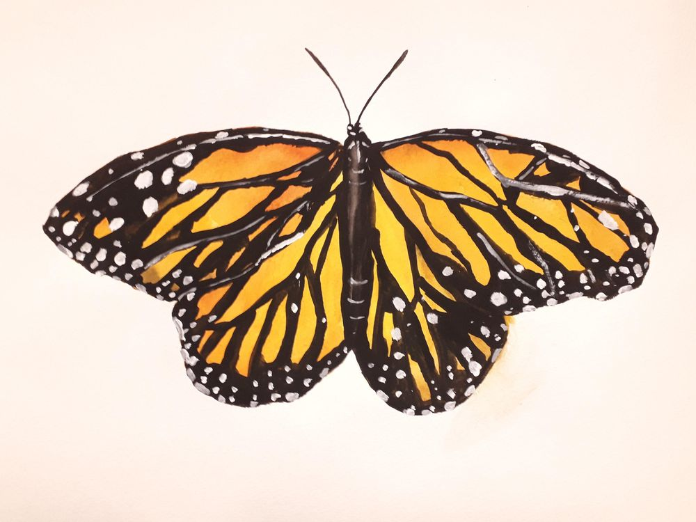 Watercolor butterflies - image 1 - student project