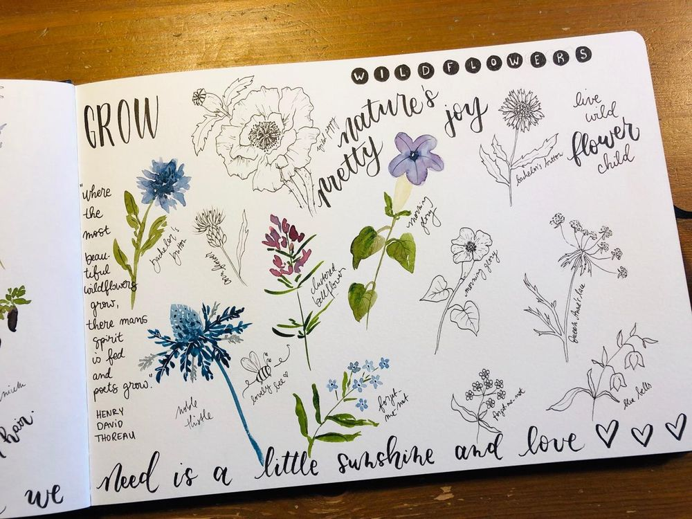 Wildflower studies - image 6 - student project