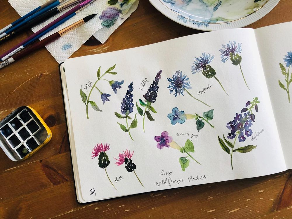 Wildflower studies - image 3 - student project