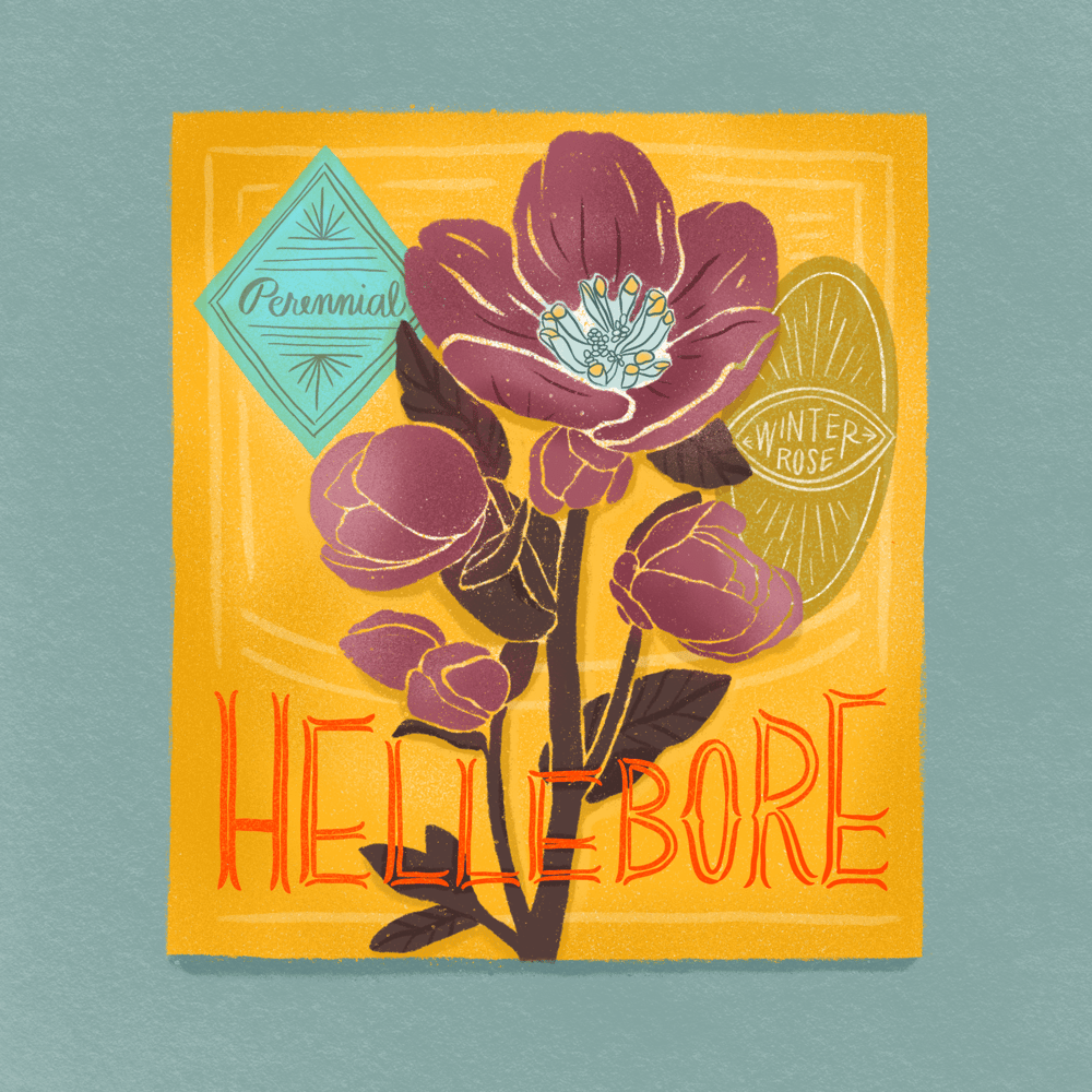 Seed Packet Illustrations - image 8 - student project