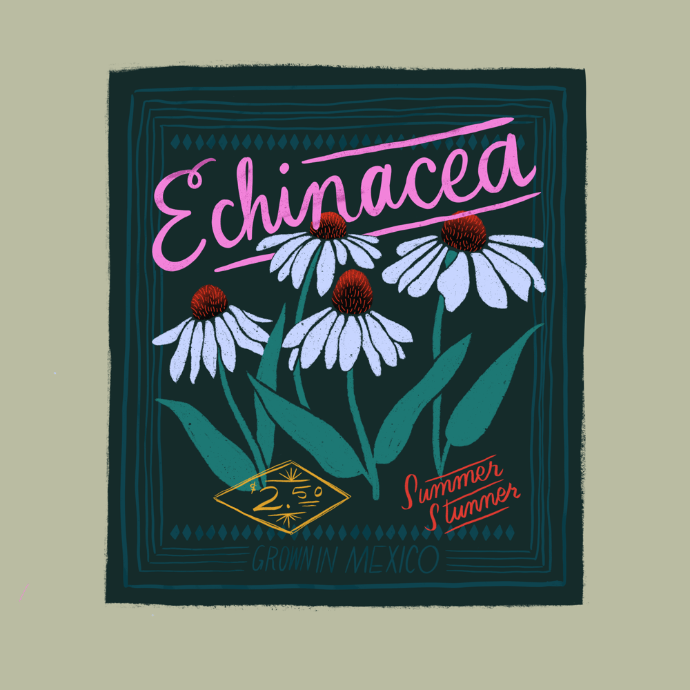 Seed Packet Illustrations - image 6 - student project