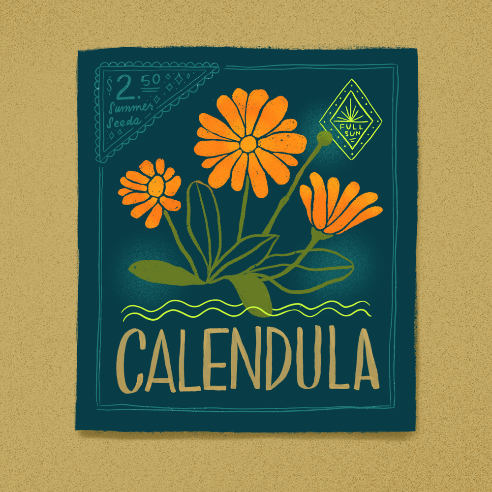 Seed Packet Illustrations - image 4 - student project
