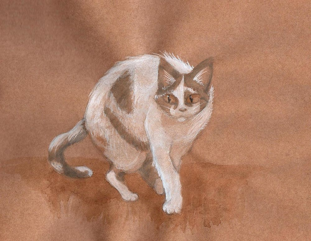 Cat Study - image 2 - student project