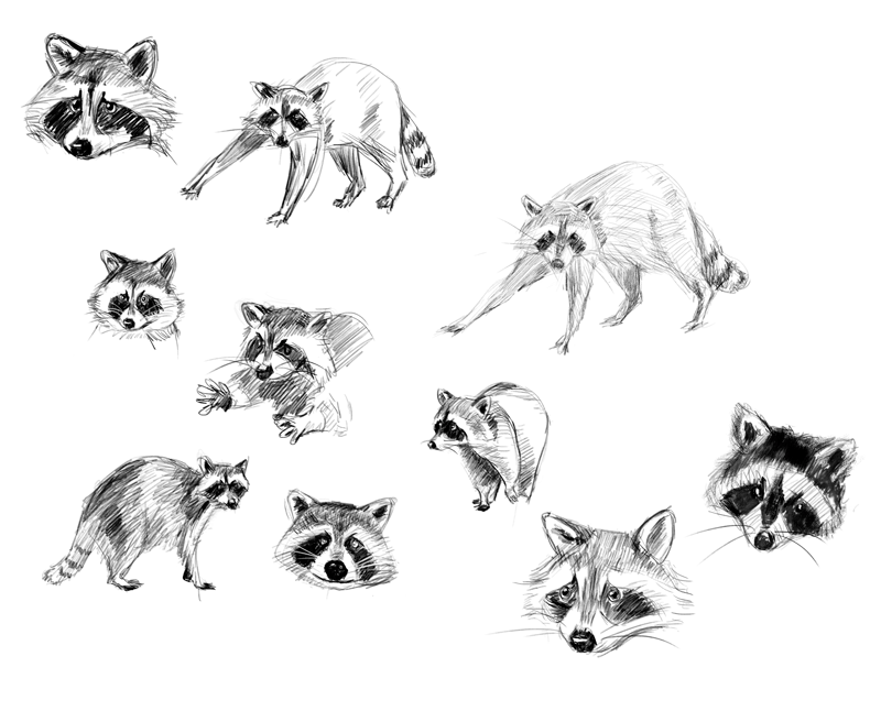 Racoon - image 1 - student project