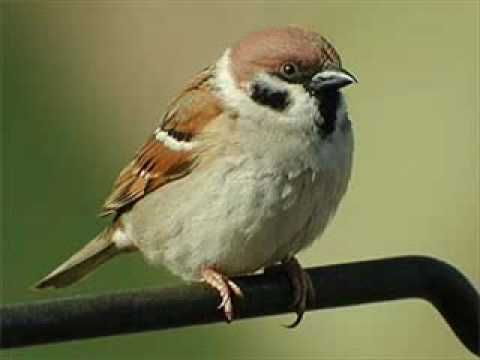 little bird - image 1 - student project