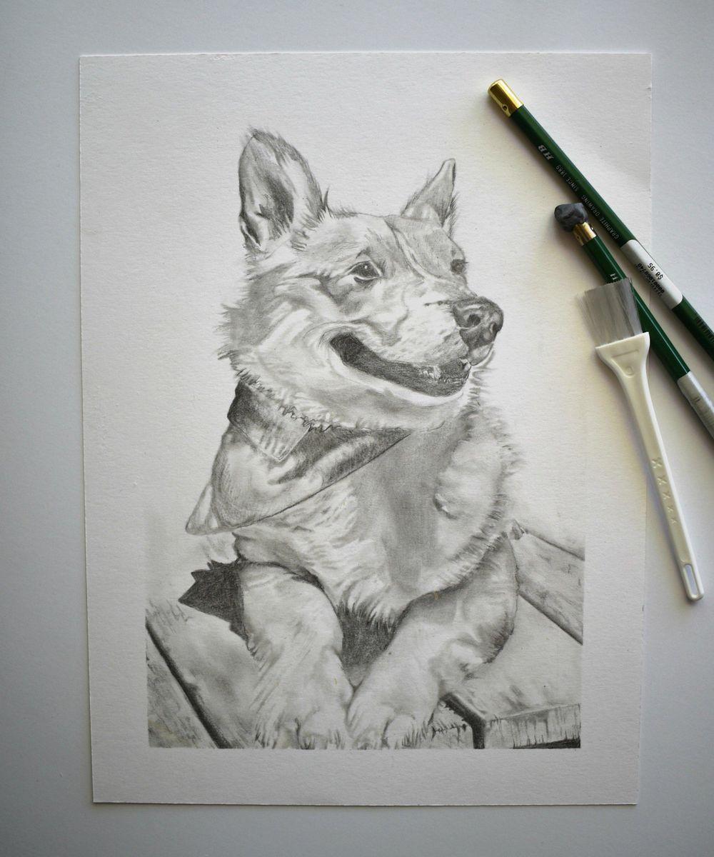 Corgi Drawing - image 1 - student project