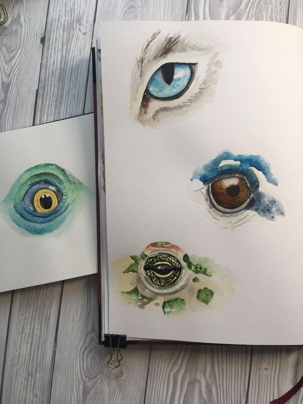 Animal Eyes in Watercolor - image 1 - student project