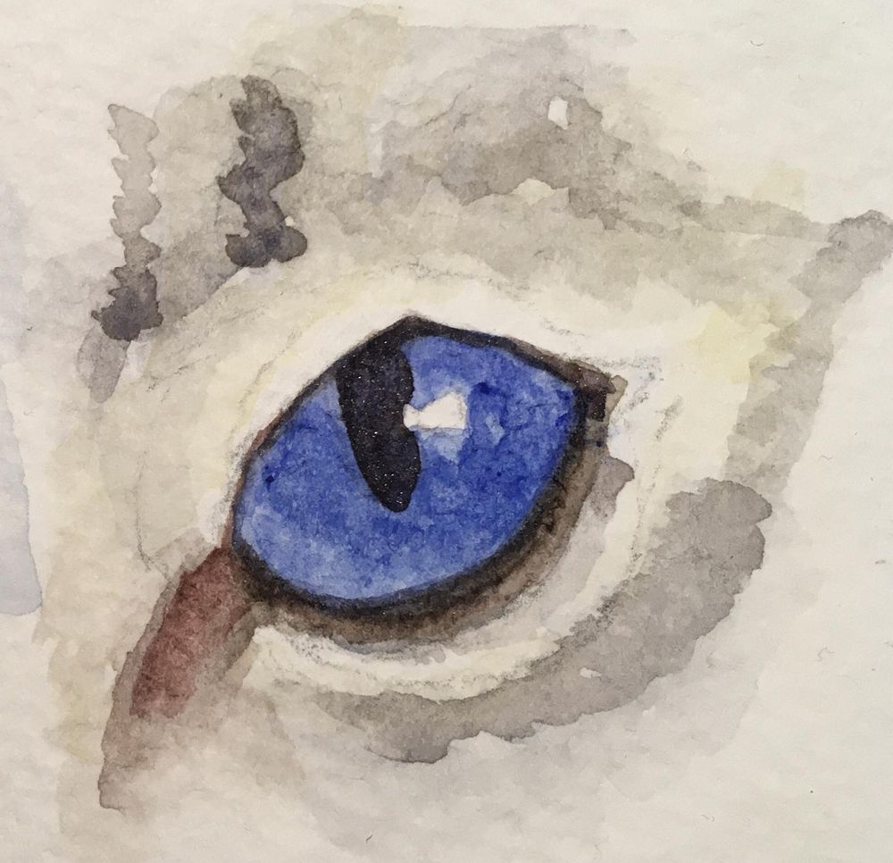 Animal Eye Studies - image 3 - student project