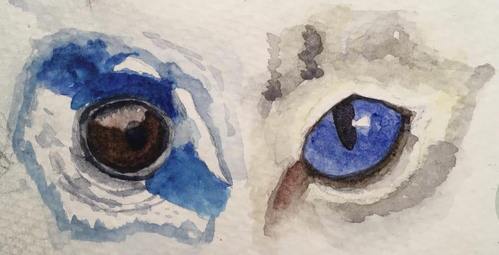 Animal Eye Studies - image 2 - student project