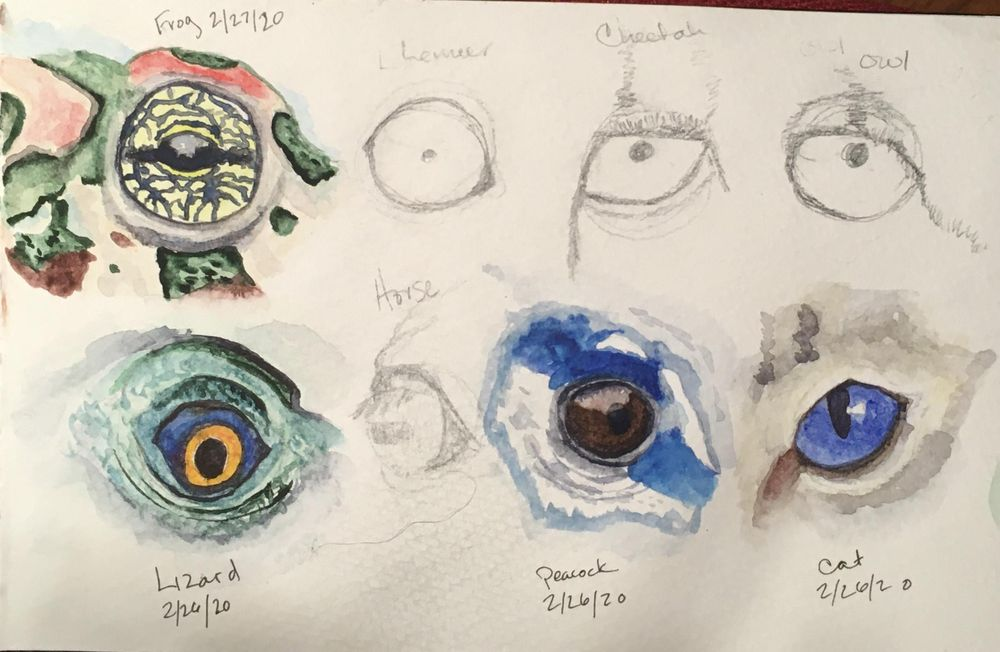 Animal Eye Studies - image 1 - student project