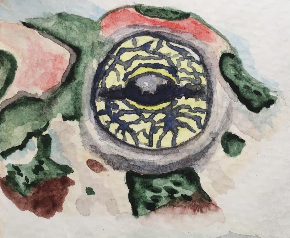 Animal Eye Studies - image 5 - student project