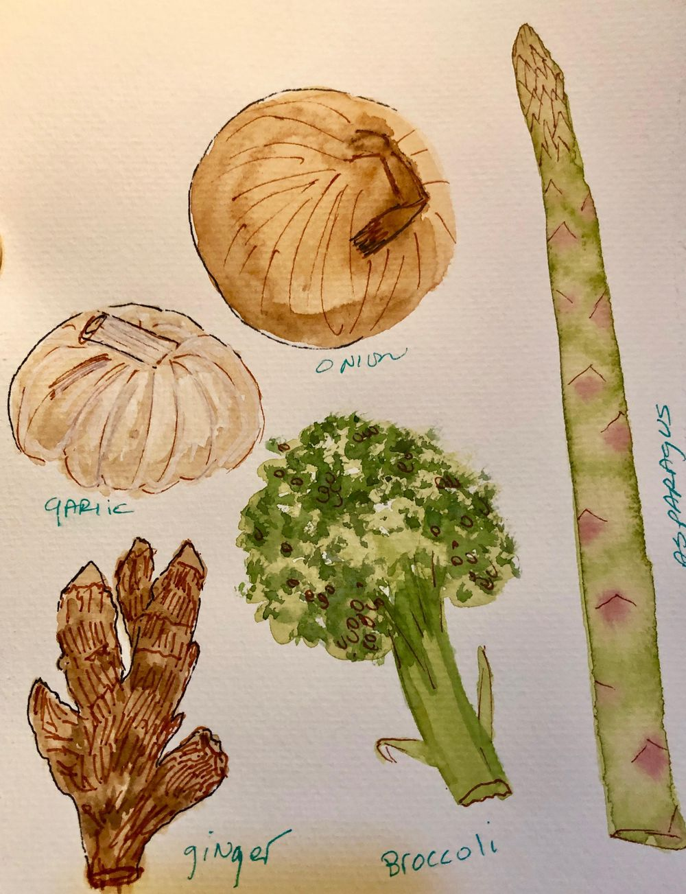 Bring Watercolor to life-veggies with line drawing - image 1 - student project