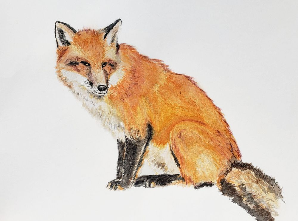 Mixed Media fox - image 8 - student project