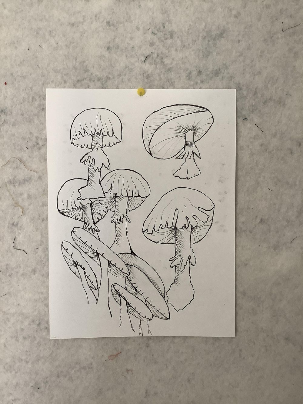 Funky mushrooms - image 1 - student project