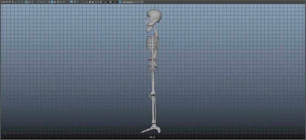 Skeleton Guy - image 7 - student project