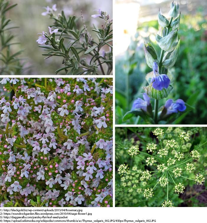 Herbs in Bloom - image 1 - student project