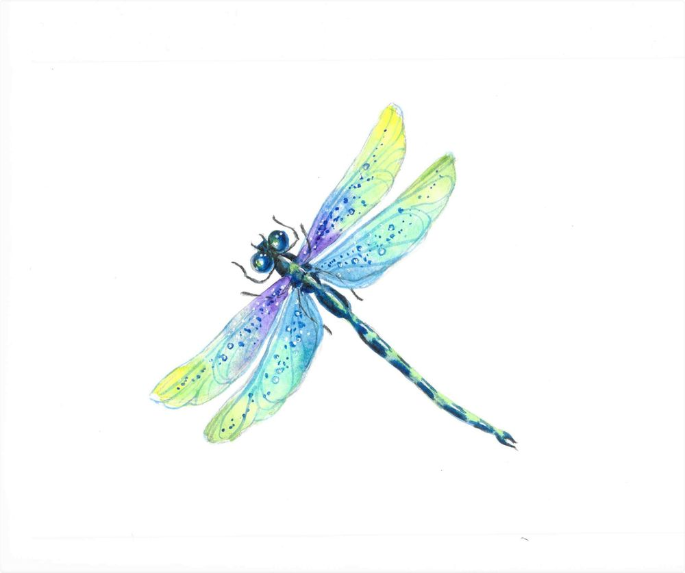 Watercolor Dragonfly - image 1 - student project
