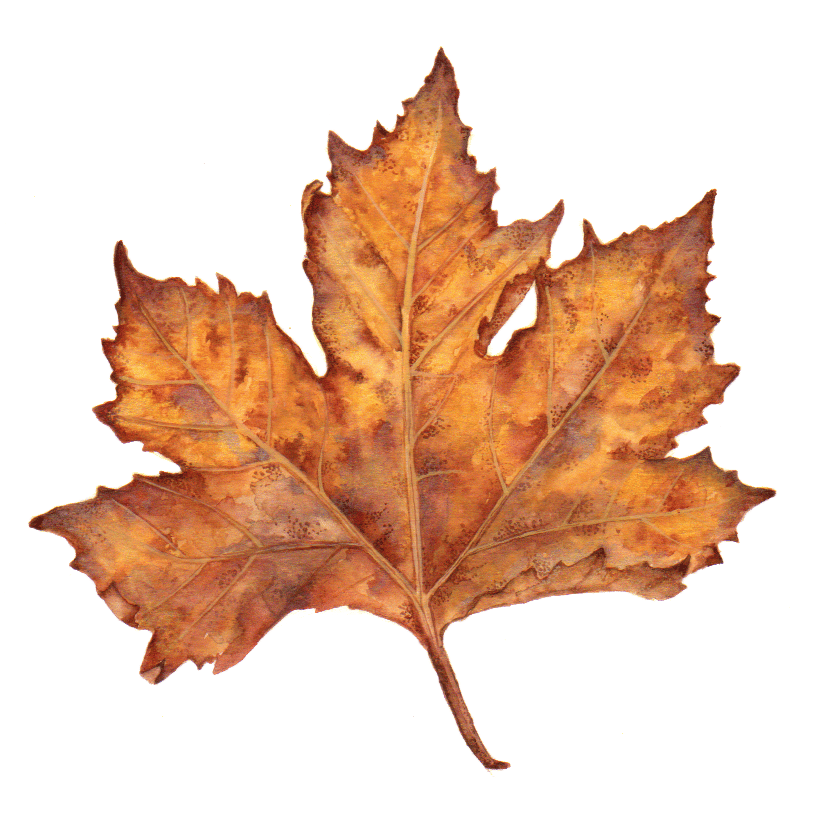Maple leaf - image 3 - student project