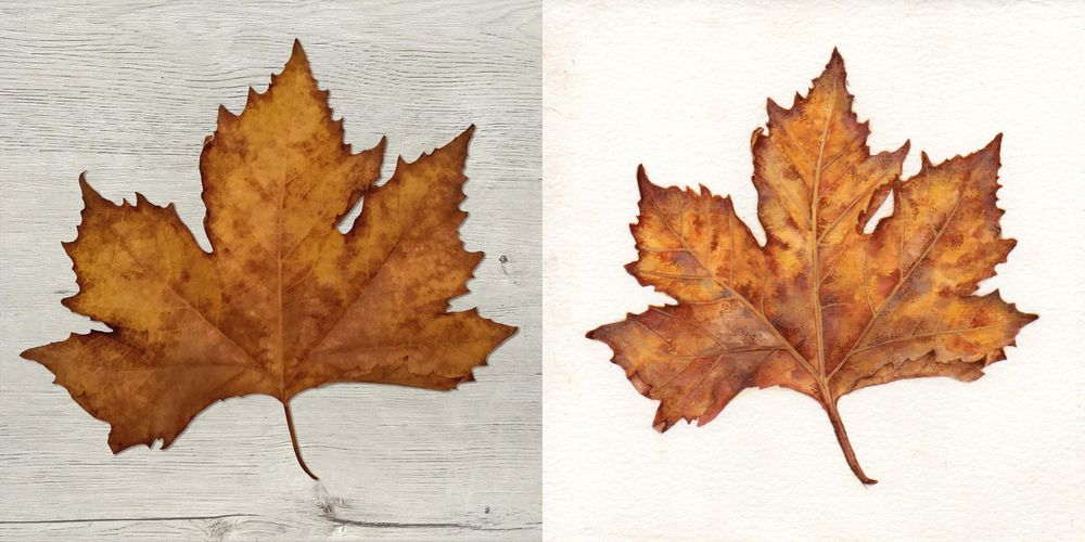 Maple leaf - image 4 - student project