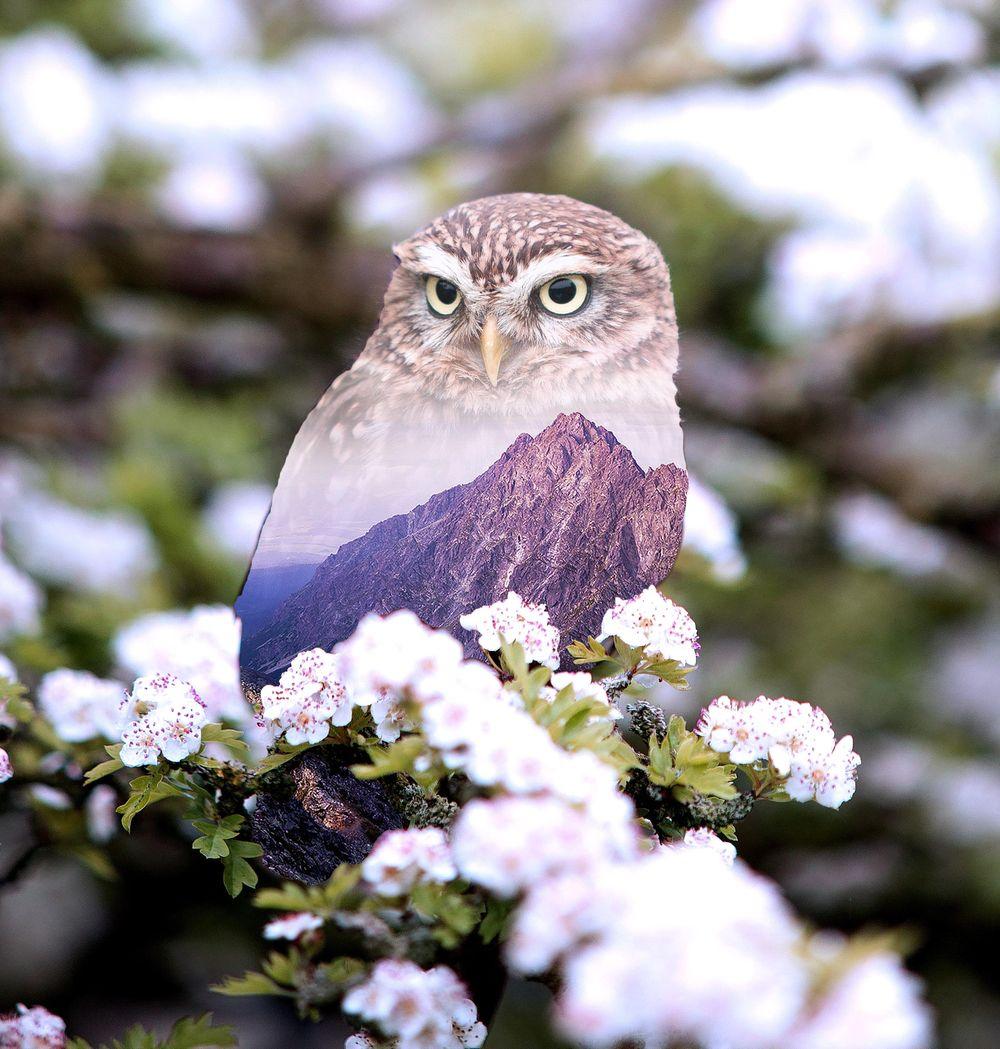 Birdies - image 1 - student project