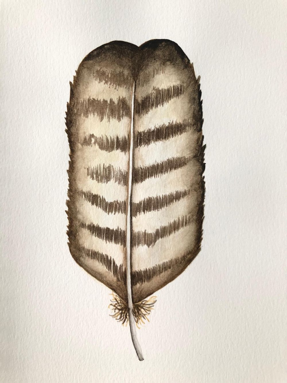 Painting Feathers - image 4 - student project