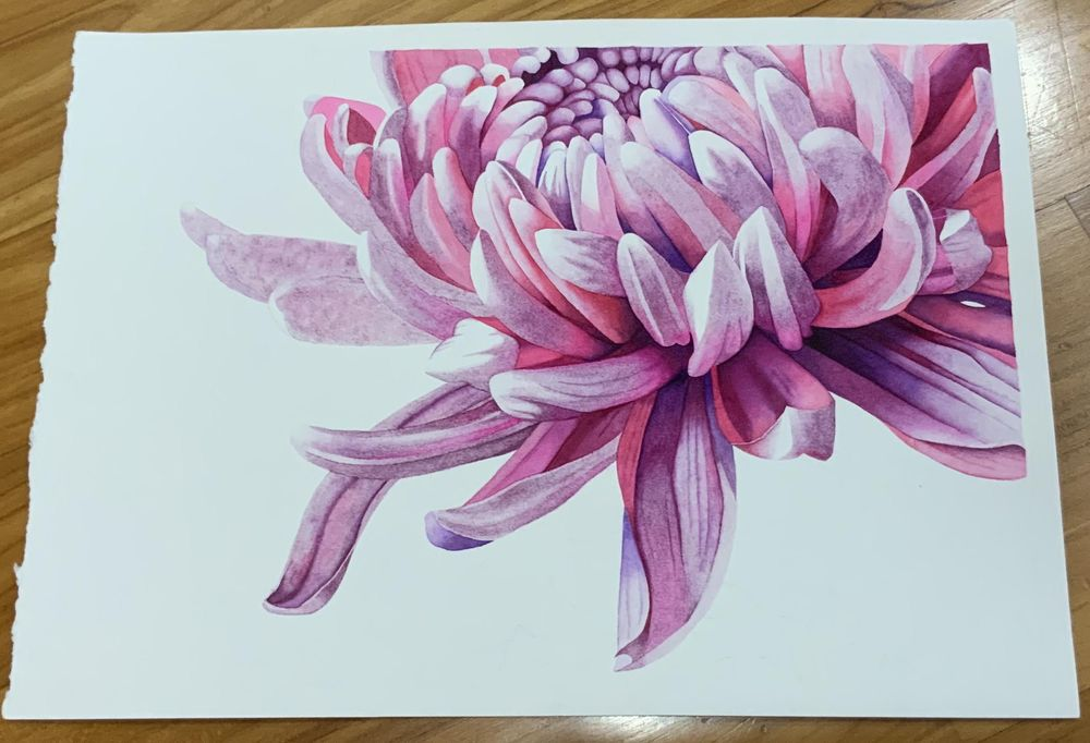 Master Watercolor Techniques: Paint a Watercolor Chrysanthemum - image 1 - student project