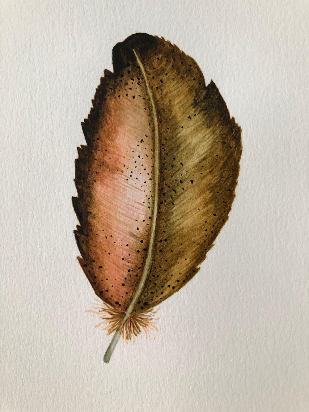 Painting Feathers - image 3 - student project