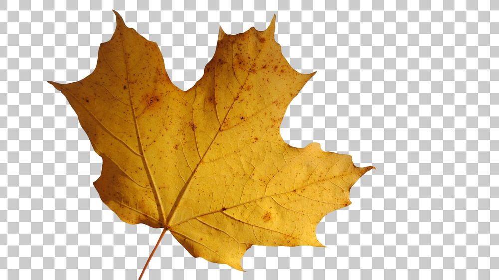 My Leaf Isolated from the Background (Sample Project) - image 2 - student project