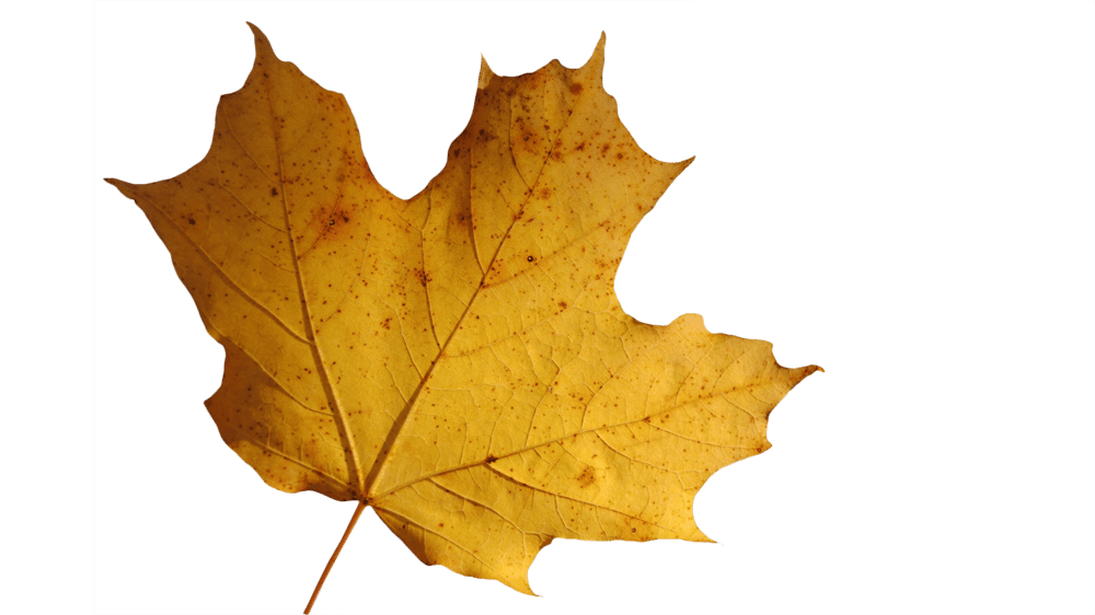 My Leaf Isolated from the Background (Sample Project) - image 3 - student project