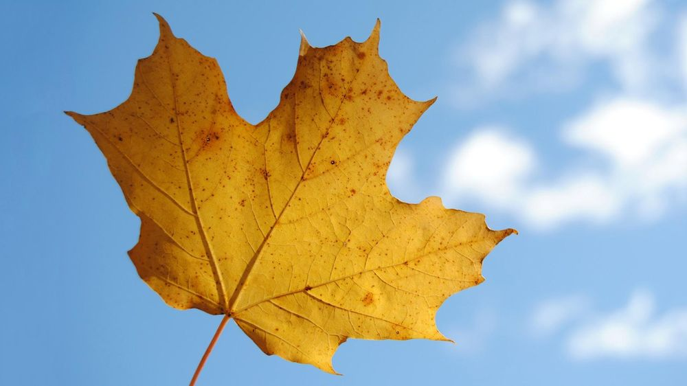 My Leaf Isolated from the Background (Sample Project) - image 1 - student project