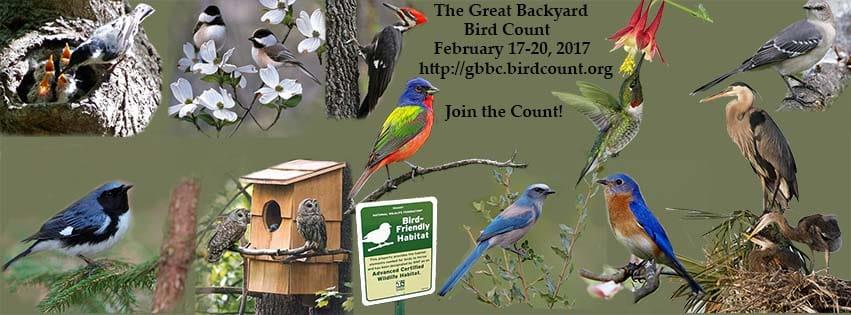 Backyard Birds - image 1 - student project