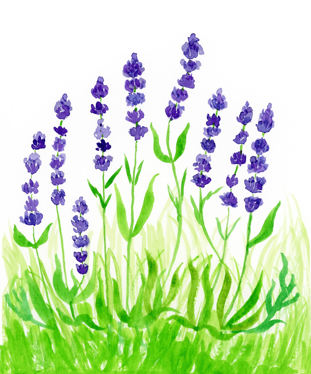 Field Of Lavenders - image 1 - student project