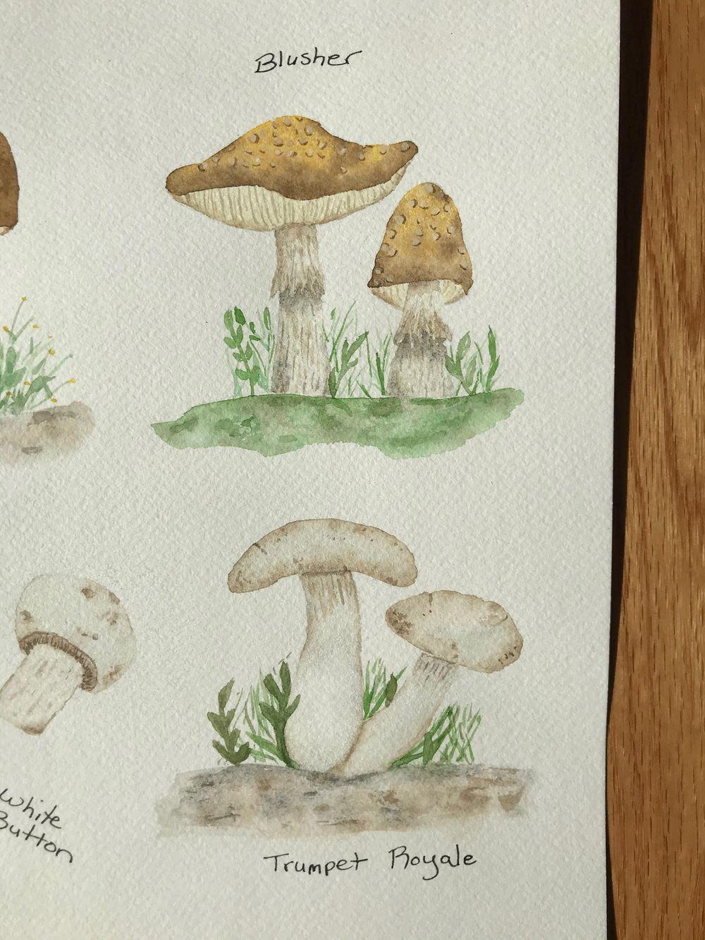 Mushrooms - image 3 - student project