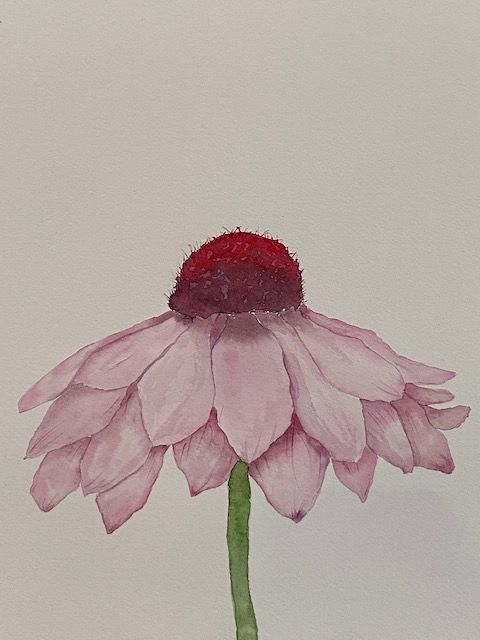 Echinacea - image 1 - student project