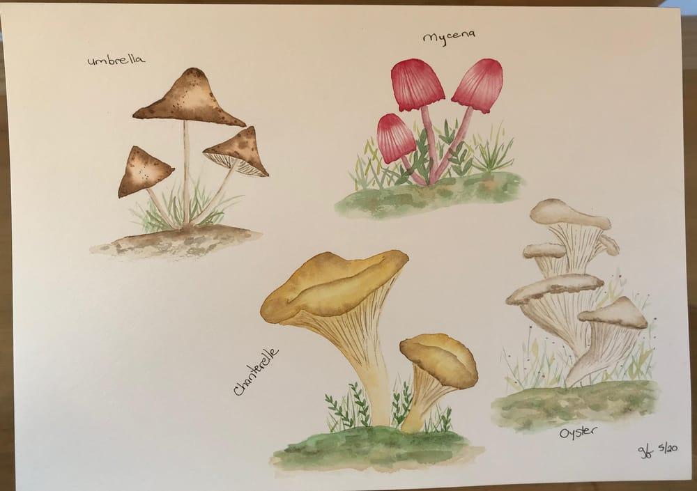 Mushrooms - image 6 - student project