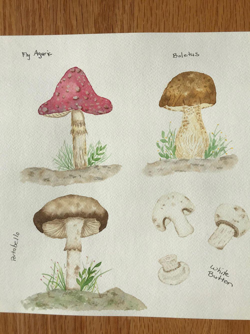 Mushrooms - image 4 - student project