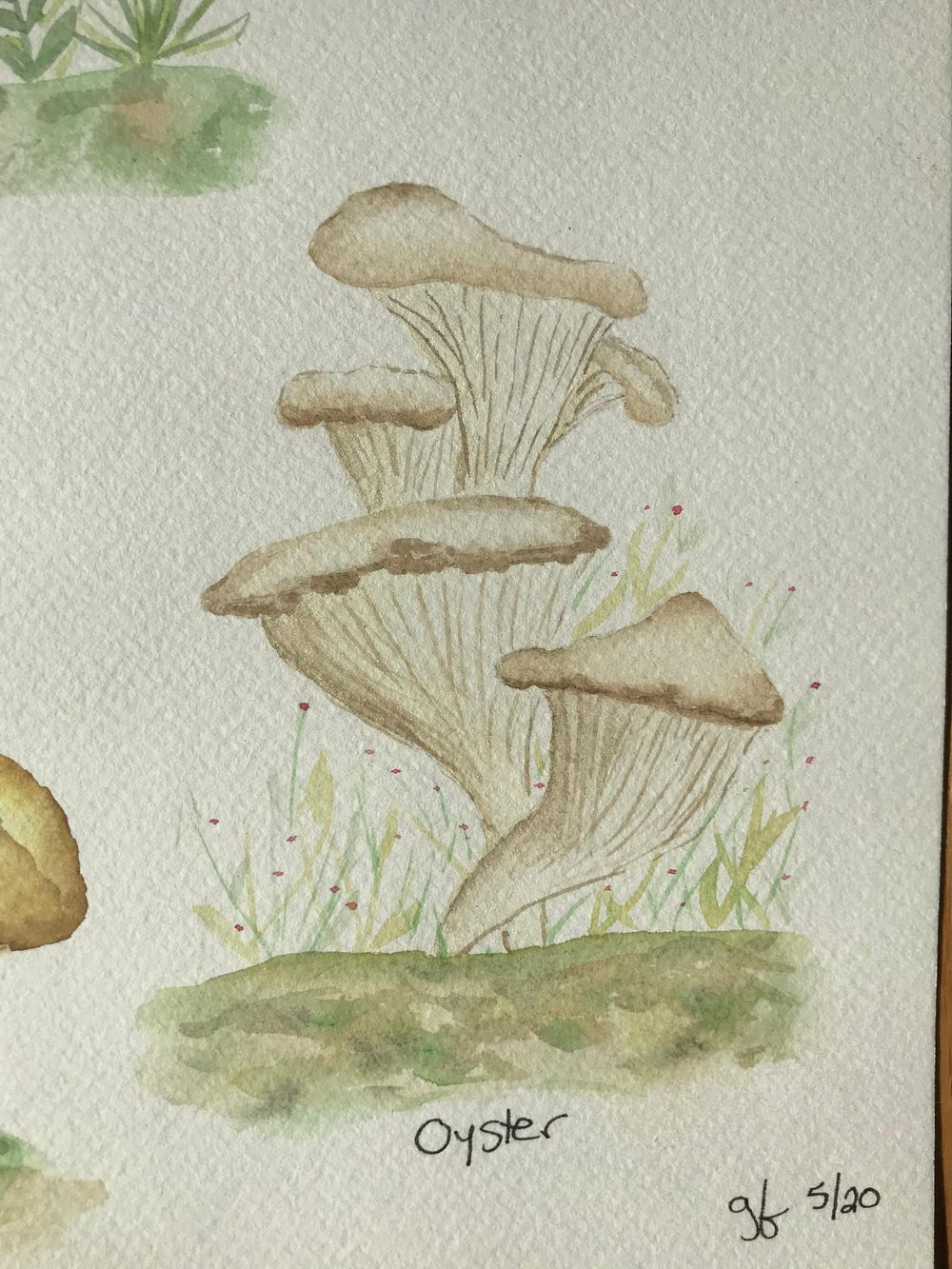 Mushrooms - image 8 - student project