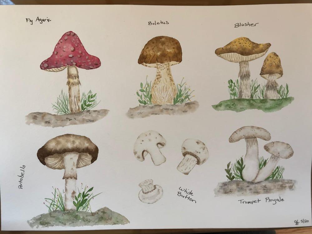 Mushrooms - image 5 - student project