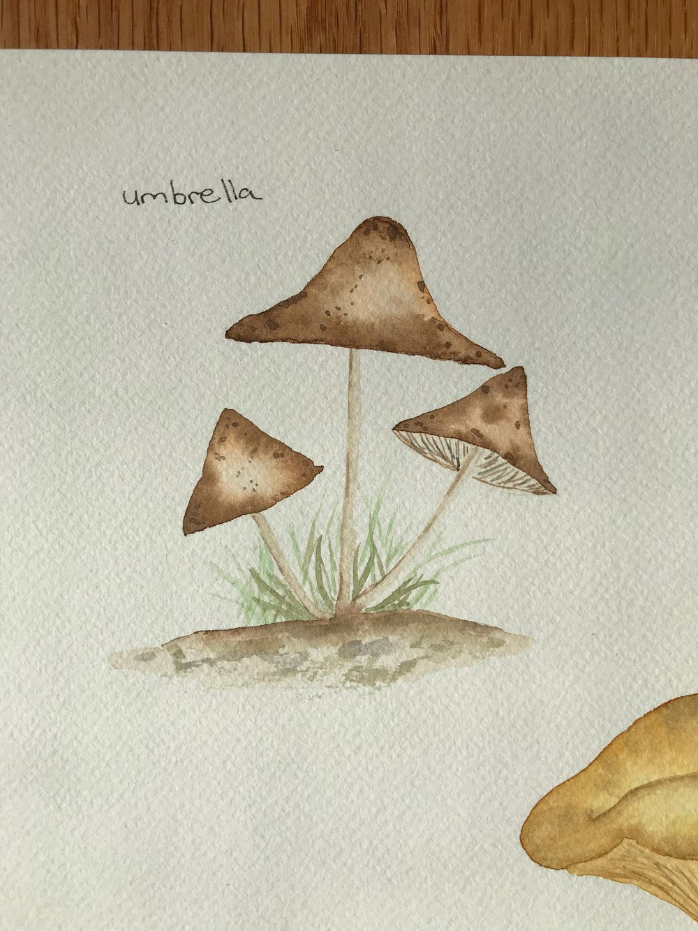 Mushrooms - image 7 - student project