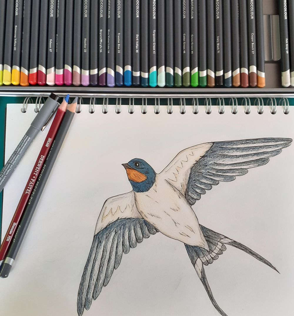 Swallow - image 2 - student project