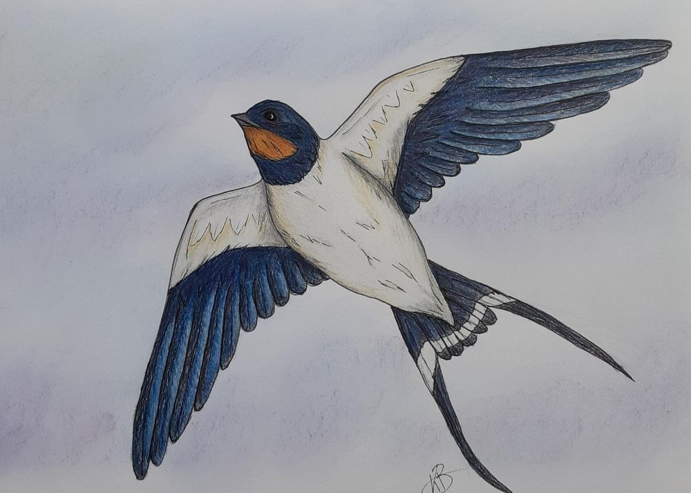 Swallow - image 1 - student project