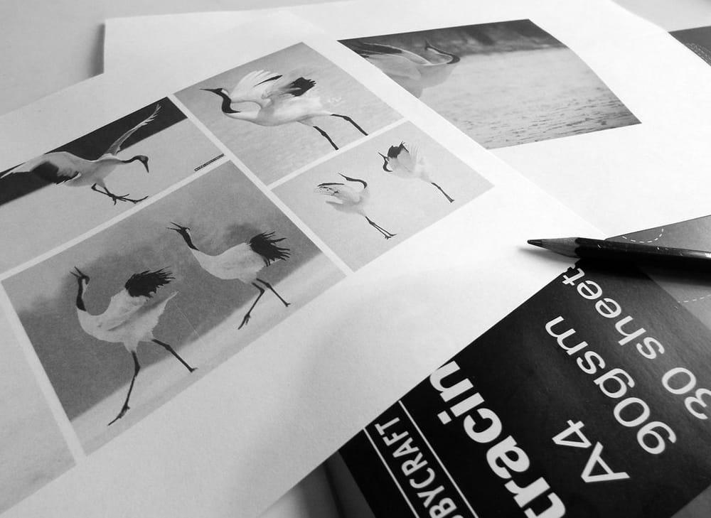 Dancing crane mark - image 1 - student project
