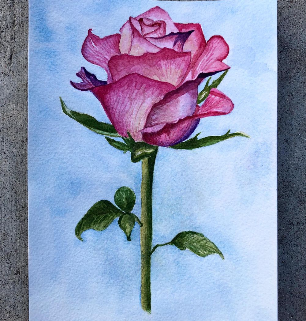 Iris and rose - image 1 - student project