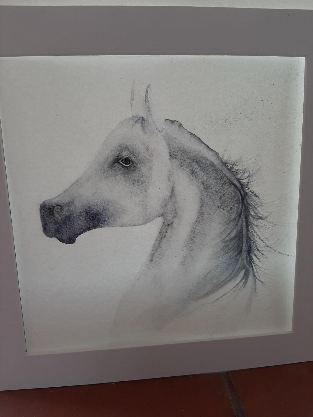 Arabian Horse:-) - image 1 - student project