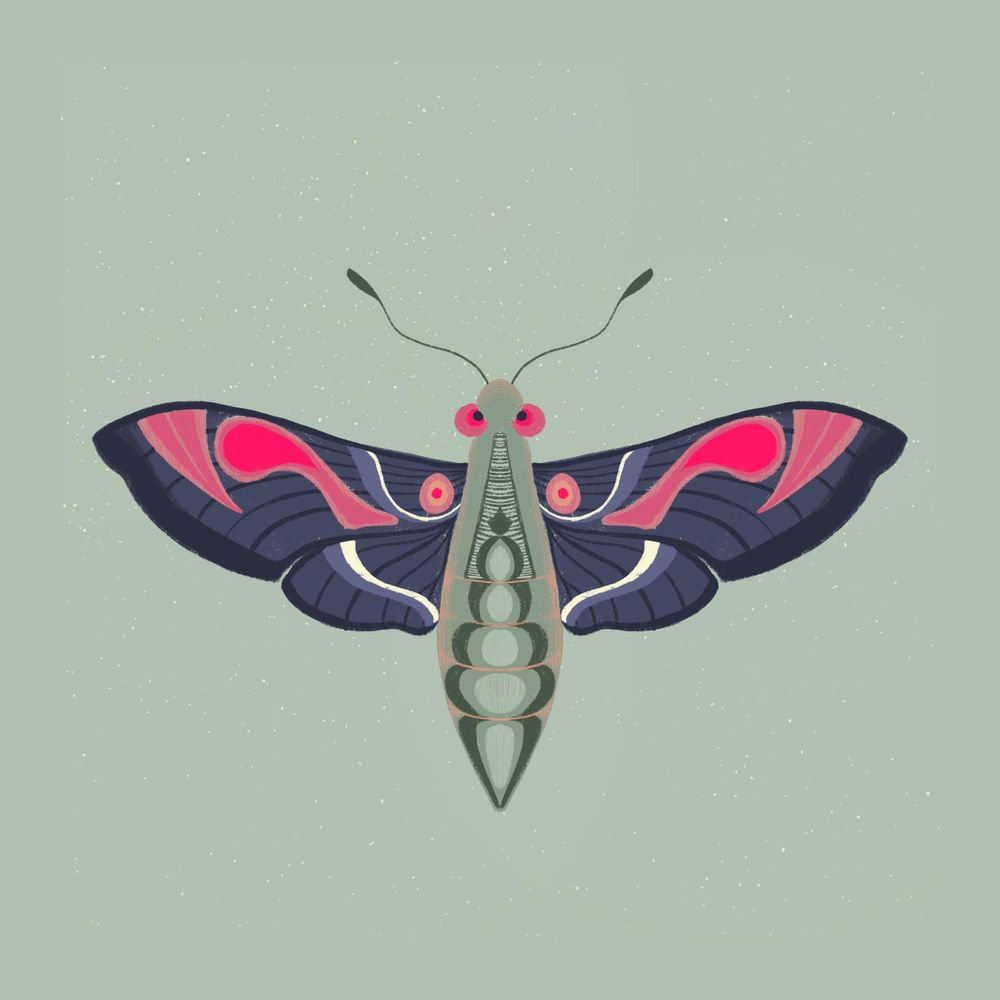 Moths - image 3 - student project